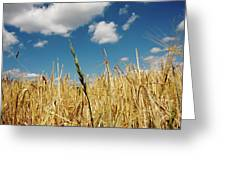 Wheat On The Rhine Greeting Card