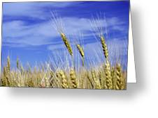 Wheat Trio Greeting Card