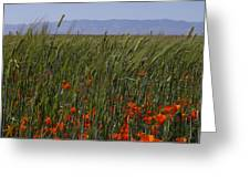 Wheat With Poppy  Greeting Card