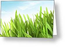 Wheatgrass Against A White Greeting Card by Sandra Cunningham