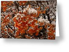When Fall Meets Winter Greeting Card