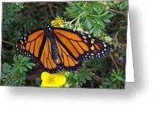 When The Rain Clears Monarch Butterfly Greeting Card