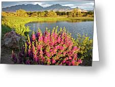 When The Rains Come In The Desert So Do The Blooms Greeting Card