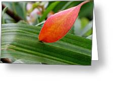 When Two Leaves Meet Greeting Card