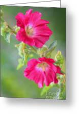 Where Flowers Bloom So Does Hope Greeting Card