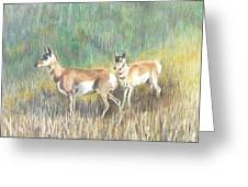 Where The Antelope Play Greeting Card