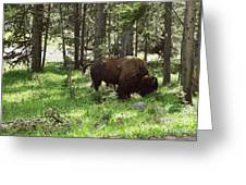 Where The Bison Roam Greeting Card