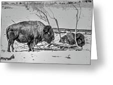 Where The Buffalo Rest Greeting Card