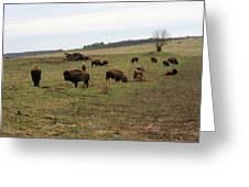 where the Buffalo Roam 3 Greeting Card