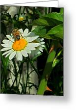 Where The Daisies Are Greeting Card by Guy Ricketts