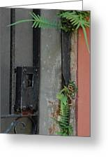 Where The Fern Grows Greeting Card