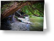Where The Forest Meets The Sea Greeting Card