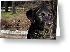 Where's The Geese Labrador 4 Greeting Card