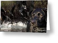 Where's The Geese Labrador 6 Greeting Card