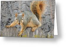 Where's The Nuts? Greeting Card