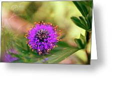 Whimsical Nature Greeting Card