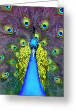 Whimsical Peacock Greeting Card