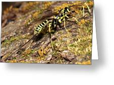 Whip Tailed Wasp Greeting Card