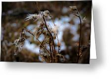Whisp Of Winter Greeting Card