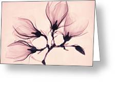 Whisper Magnolia Greeting Card