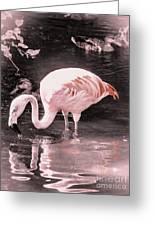 Whisper Pink Flamingo Greeting Card