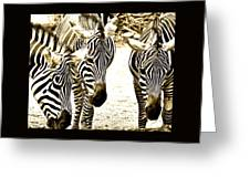 Whispering Zebras Greeting Card