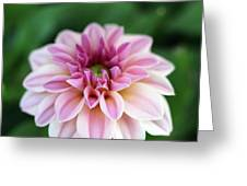 Whispers From The Garden Greeting Card