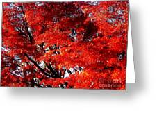 Whispers Of A Japanese Maple Greeting Card