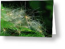 Whispy Seeds Greeting Card