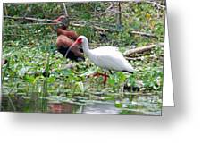 Whistler And Ibis Greeting Card