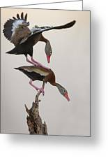 Whistling Duck Ballet  Greeting Card