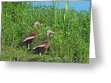 Whistling Ducks Greeting Card