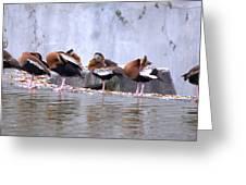 Whistling Ducks Grooming Greeting Card