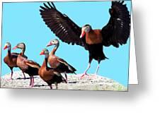 Whistling Ducks Greeting Card
