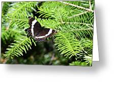 White Admiral On Tree Greeting Card