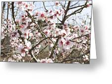 White Almond Flowers Greeting Card
