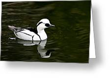 White And Black Duck Greeting Card
