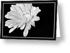 White And Black Flower Painting Greeting Card