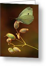White And Green Butterfly On Dried Flowers Greeting Card