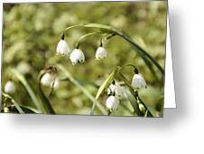 White And Green  Greeting Card