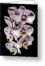 White And Magenta Orchids Greeting Card