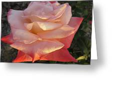 White And Peach Greeting Card