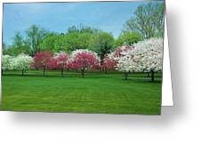 White And Pink Cherry Blossoms Greeting Card