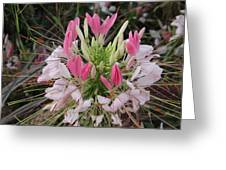 White And Pink Flower Greeting Card