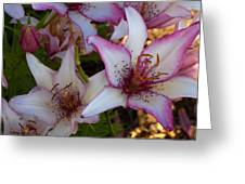 White And Pink Lilies Greeting Card