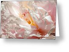 White And Pink Peony 3 Greeting Card