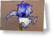White And Purple Bearded Iris Greeting Card