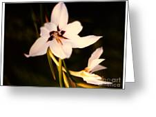 White And Purple Lily Greeting Card