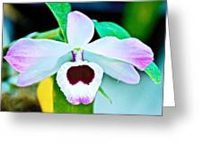 White And Purple Orchid In Greenhouse At Pilgrim Place In Claremont-california Greeting Card