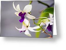 White And Purple Orchid Greeting Card